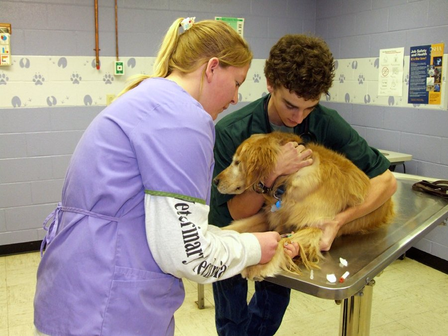 CCC Vet Techs Care for Golden Retriever
