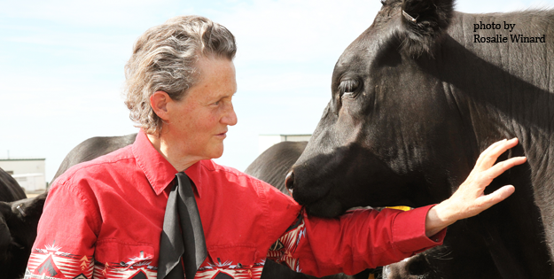 Grandin with cow.